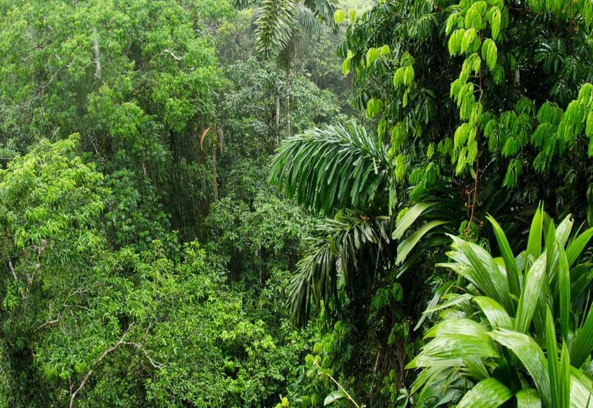Μυστικό του Αμαζονίου στη μάχη ενάντια νευρολογικών διαταραχών