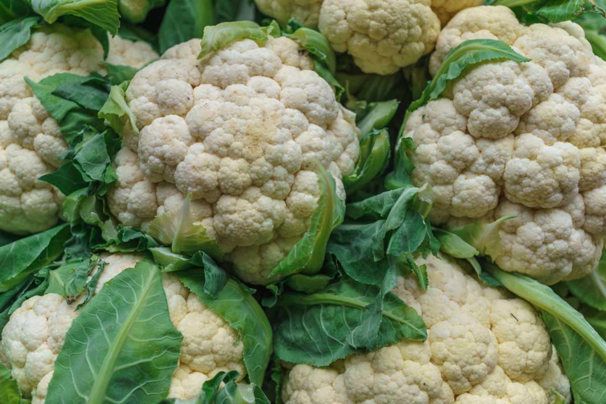 Διατροφή του χειμώνα - Γνωρίστε το λαχανικό με την υψηλή διατροφική αξία